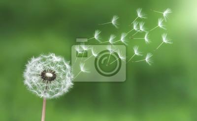 Fotomural Dandelion