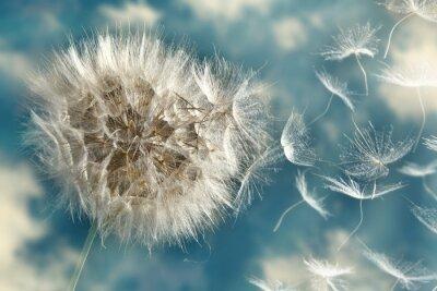 Fotomural Dandelion Perder Sementes no vento