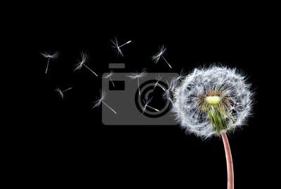 Fotomural Dandelion vôo