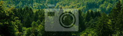 Fotomural Dark green forest landscape