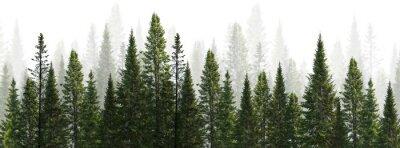 Fotomural dark green straight trees forest on white