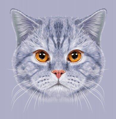 Fotomural De Ilustração - retrato, britânico, shortinho, cabelo, gato. Gatinho cinzento bonito Gato doméstico com olhos alaranjados.