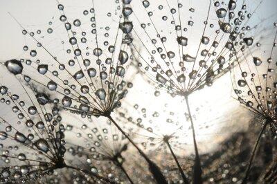 Fotomural De-leão com gotas de orvalho