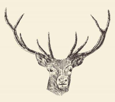 Fotomural Deer Head ilustração do vintage, tirado mão, Vector