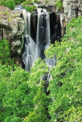 Fotomural Denham cai em Beechmont, Queensland, Austrália. Localizado na reserva de Denham.