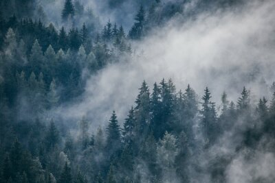 Fotomural Dense morning fog in alpine landscape with fir trees and mountains.