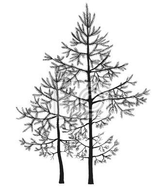 Desenho Preto Da Pena De Abeto árvores Pequenos Em Uma