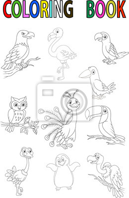 Desenhos Animados Livro Para Colorir Passaro Fotomural