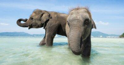 Fotomural Dois bebê elefante no mar. Edição Banner.