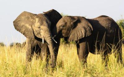 Fotomural Dois, carinhoso, elefantes