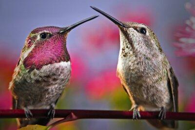 Fotomural Dois colibris estão ao lado de se em um galho com as flores no fundo.