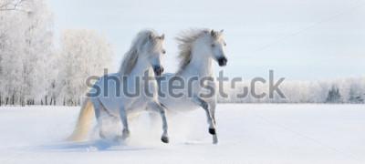 Fotomural Dois galões brancos galopando no campo de neve