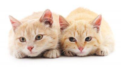 Fotomural Dois gatos vermelhos.