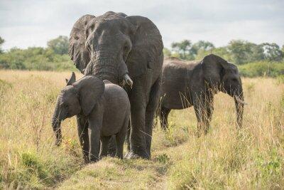 Fotomural elefante com filhote