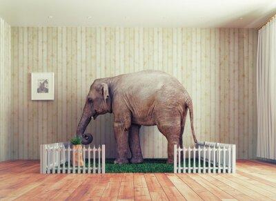 Fotomural Elefante de bezerro - animal de estimação