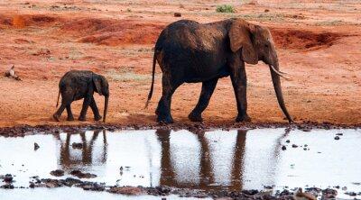 Fotomural Elefante em Tsavo East National Park