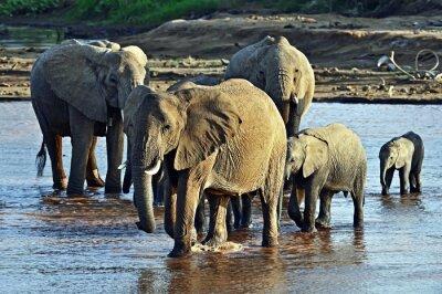 Fotomural Elefante na savana