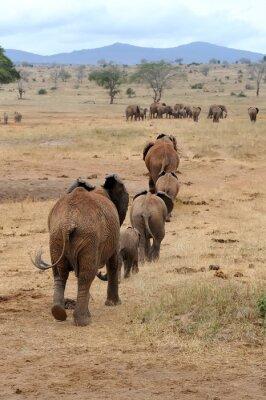 Fotomural Elefante, nacional, parque, kenya