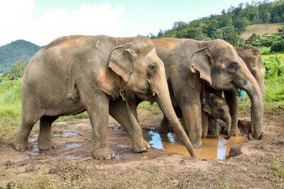 Fotomural Elefante, rebanho, bebê, elefante, billabong