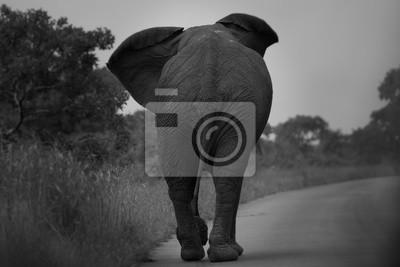 Fotomural elefante solitário a caminho 1