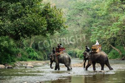 Fotomural Elefante, trekking, através, selva, norte, tailandia