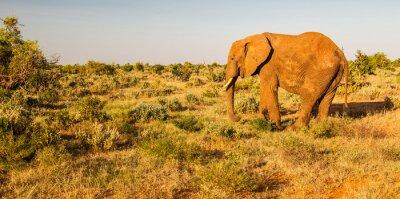 Fotomural Elefante, Tsavo, leste, nacional, parque, kenya
