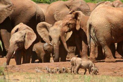 Fotomural Elefantes ADD0 07