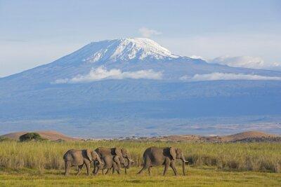 Fotomural Elefantes com Kilimanjaro