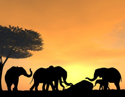 Fotomural Elephants Morn Their Dead at sunset, a very tender scene.