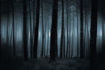 Fotomural Escuro, nevoento, floresta