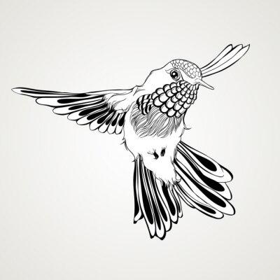 Fotomural Estilo tirado mão do vintage do pássaro do zumbido do vôo.
