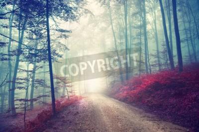 Fotomural Estrada de floresta do outono do efeito da cor do vintage com luz da fantasia. Vintage filtro efeito usado.
