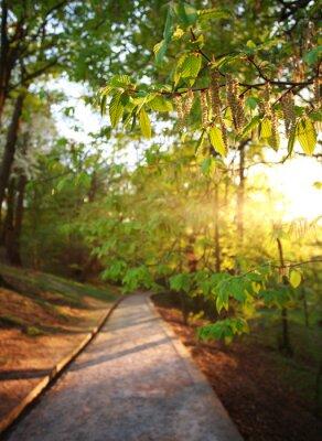 Fotomural Estrada no parque verde da cidade, iluminado os raios de sol