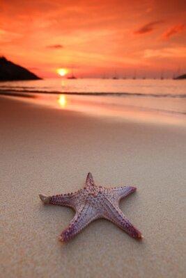 Fotomural Estrela do mar na praia