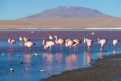 Fotomural Flamingos cor-de-rosa em