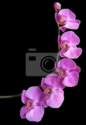 Fotomural Flor da orquídea quadro de fundo
