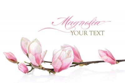 Fotomural Flor de magnólia em um fundo branco