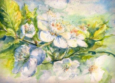 Fotomural Floração, ramo, cereja, árvore, aguarela, pintado