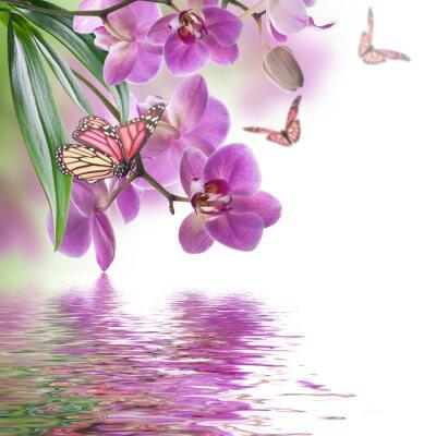 Fotomural Floral de orquídeas tropicais e borboleta
