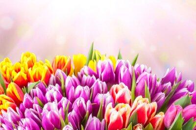 Fotomural Flores bonitas da tulipa