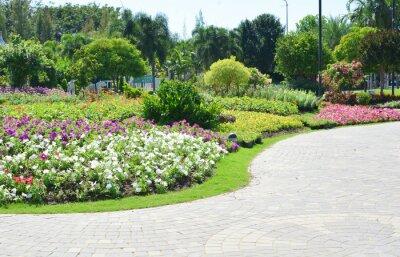 Fotomural Flores coloridas no jardim
