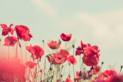 Fotomural Flores da papoila retro pacífica fundo de verão