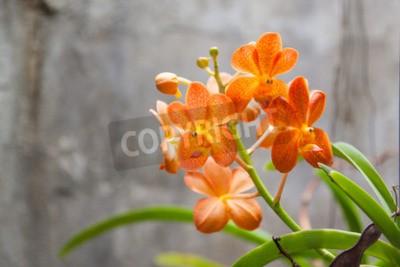 Fotomural Flores de orquídea laranja
