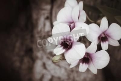Fotomural Flores de orquídeas vintage