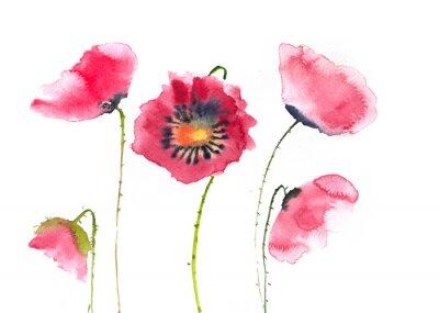 Fotomural Flores vermelhas bonitas da papoila, pintura da aguarela