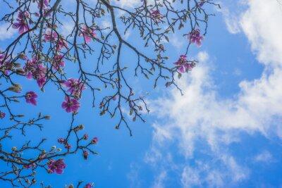 Fotomural Florescendo, magnólia, árvore