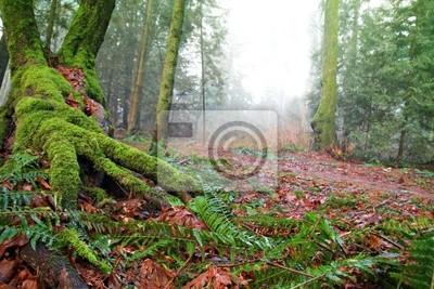 Fotomural Floresta