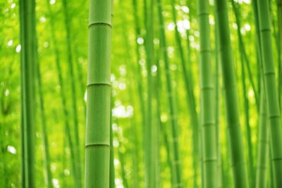 Fotomural Floresta de bambu