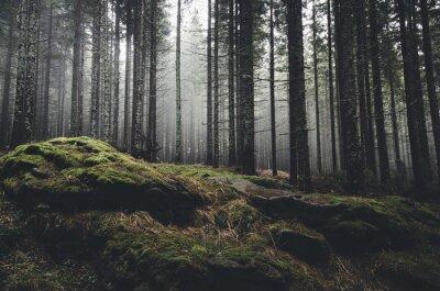 Fotomural floresta deserto paisagem com pinheiros e musgo em rochas