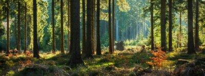 Fotomural Floresta ensolarada panorâmica no outono